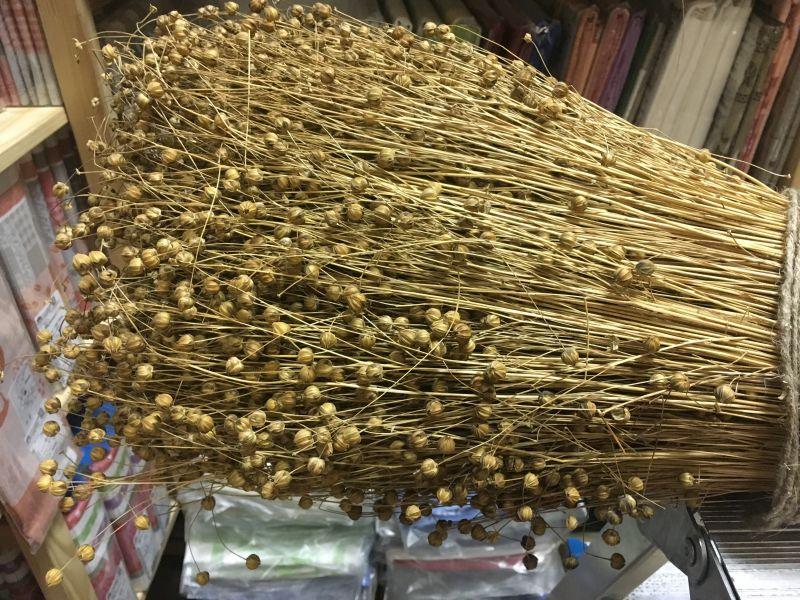 Сноп льна долгунца сухой с коробочками семян